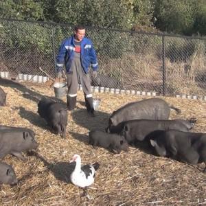 Ринальдо Маллямов Руководитель Мастерской Эффективной Природы птицеводство и животноводство со своими животными