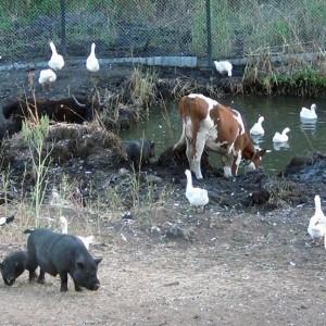В общем стаде каждое из животных находит свою нишу