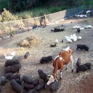 Мирное сосуществование животных