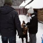 Дети и нубийский козе